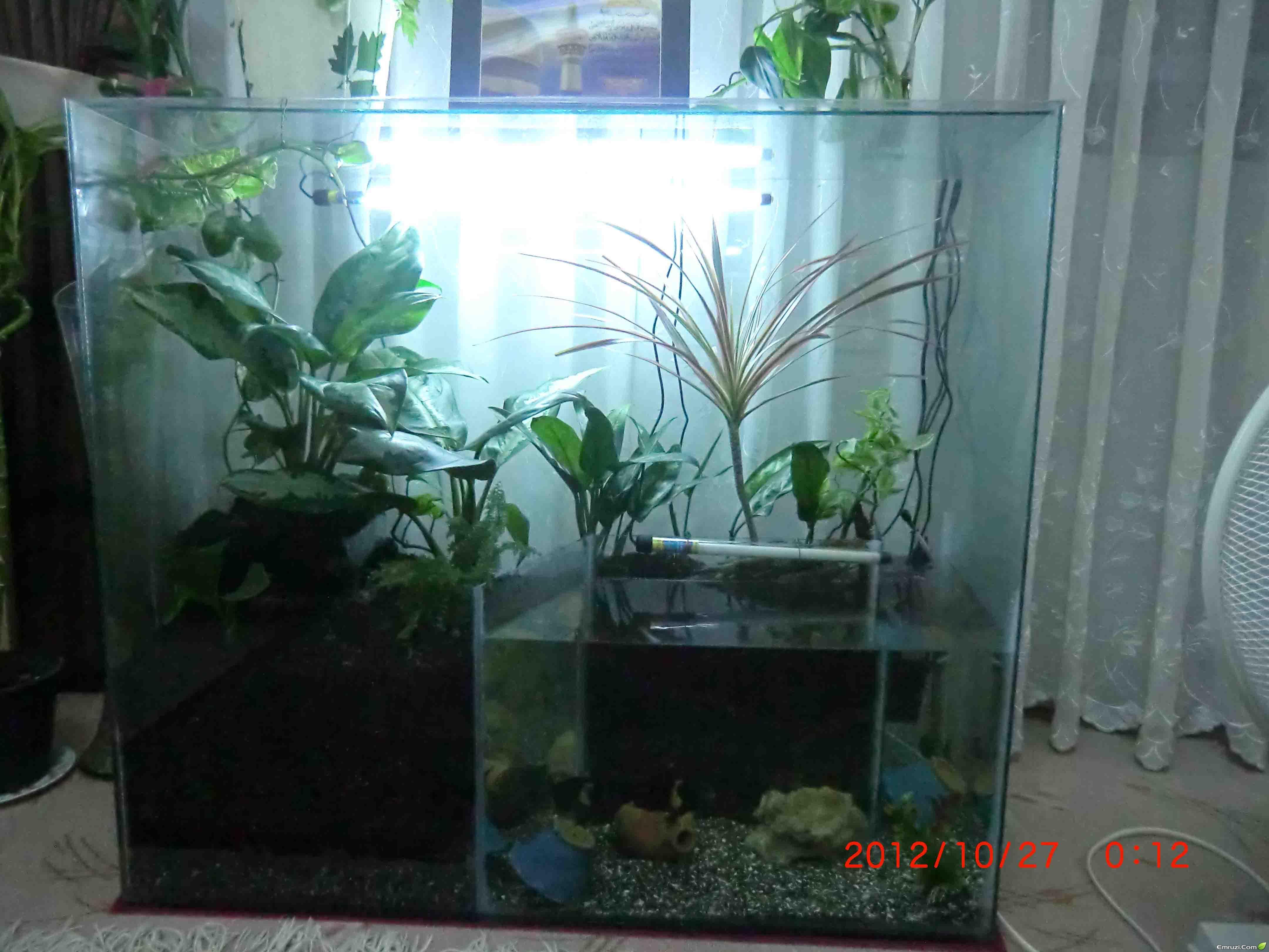 گلها و گیاهان زینتی - مراحل ساخت و راه اندازی تراریومتصویر بالا مربوط به تراریوم تلفیقی ای هست که خودم درست کردم . البته هنوز  کامل نشده و باید روش کار کنم . در واقع من تو این تراریوم یه قسمت برای ماهی  ها ...